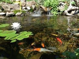 Pond Installation-Maintenance Contractor-Oklahoma City|Oklahoma ... Pond Installationmaintenance Ctracratlantafultongwinnett Supplies Installation Maintenance Centerpa Lancaster Nashville Area Coctorbrentwoodtnfranklin Check Out This Amazing Certified Aquascape Contractor Water Buildercontractor Doylestown Bucks Countypa Fish Koi Coctorcentral Palebanonharrisburg Science Contractors Outdoor Living Lifestyleann Arborwashtenawmichiganmi Garden Lifestyle Specialistsatlantafultongwinnett