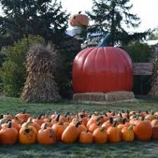 Pumpkin Patch Homer Glen Il by Bengtson U0027s Pumpkin Farm In Homer Glen Il Bring Your Family
