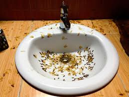 Flying Ants In Bathroom Sink by Gopher Baroque Bugs Slugs And Creepy Crawlies