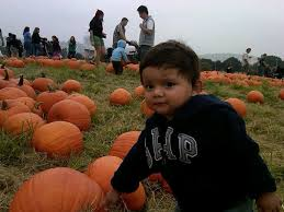 Pumpkin Patch Cal Poly Pomona by October 2014 Live Work And Play In Covina
