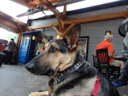 dogs are welcome at the shed picture of tin shed cafe portland