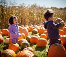 Pumpkin Picking Places In South Jersey by 10 Real Deal Pumpkin Patches Near Boston Plus Our Favorite