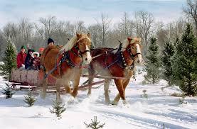 Plantable Christmas Trees Columbus Ohio by Buy Your Wife A Fir For Christmas Ohio Ag Net Ohio U0027s Country