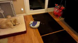 Roomba For Hardwood Floors Pet Hair by Neato Xv 21 Robotic Vacuum Vs Ton Of Pet Hair Vacuum Demo