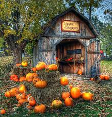 Pattersons Pumpkin Patch Gig Harbor by Best 25 Barn Pictures Ideas On Pinterest Country Barns Beauty