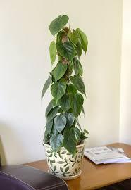 Good Plants For Bathroom by Best Plants For The Bathroom Indoor Gardener