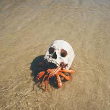 Do Hermit Crabs Shed Shell by Hermit Crab Using A Skull For A Shell Pics