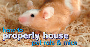 housing for rats mice