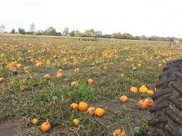 Northern Illinois Pumpkin Patches by Pumpkin Patch Picture Of Stade U0027s Farm And Market Mchenry