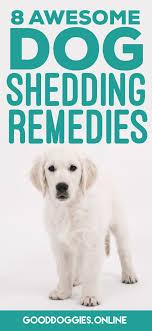 stop blue heeler shedding best 25 australian shepherd shedding ideas on