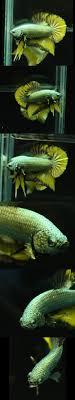 189 Best Aquarium Images On Pinterest | Pond Ideas, Fish Ponds And ... Koi Water Barn Archive 43 Best Bassin Tang Images On Pinterest Backyard Ponds The Market Thekoimarket Twitter Best 25 Ponds For Sale Ideas Polymer Resin Diy Upcoming Auctions Larry A Watson Realtorauctioneer 44 Japanese Koi Fish And Listing 410 Scott Westmoreland Ks Mls 20171278 Cssroads 1617 Japankois Carp 250 Goldfish 189 Aquarium Pond From Niigata