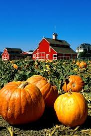 Pumpkin Patch Nashville Area by 18 Best Pumpkin Patch Images On Pinterest Pumpkin Patches
