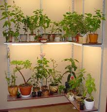 indoor lighting for tropical plants toptropicals