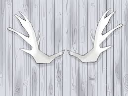 Moose Shed Antler Mounting Kit by How To Find Antler Sheds 8 Steps With Pictures Wikihow