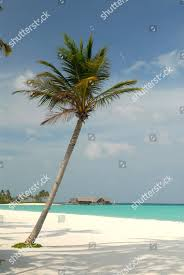 100 One And Only Reethi Rah Beach North Male Editorial Stock Photo Stock