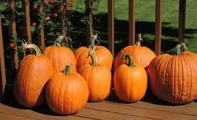 Cinderella Pumpkin Seeds Australia pumpkin nook pumpkin facts pumpkin trivia