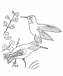 Trend Hummingbird Coloring Pages Cool And Best Ideas