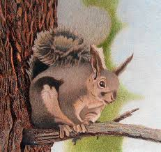 Lifetime 10x8 Sentinel Shed by Impression Evergreen Abert U0027s Squirrel Colored Pencil Drawing