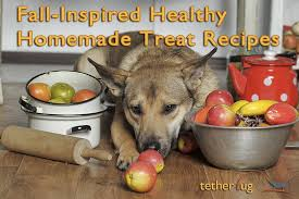 Dog Constipation Treatment Pumpkin by Your Dog Will Love These Fall Inspired Healthy Homemade Treat