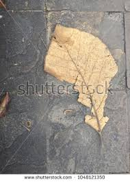 Top Eye View Closeups Of Dried Leaf On Cement Concrete Walkways Floor Background 1048121350