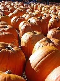 The Great Pumpkin Patch Arthur Il by Comté De Moultrie Mapio Net