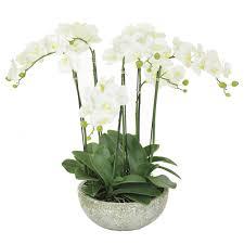 Emporium Mini Plants Assorted BIG W