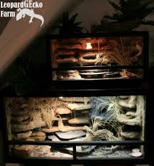 terrarien leopardgecko farm