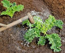 Homemade Fertilizer For Pumpkins by Fertilizers For Tomatoes