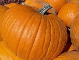 Santa Clarita Pumpkin Patch Festival by Pumpkin Patches And Harvest Festivals In Los Angeles Trekaroo