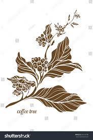 Branch Of Coffee Tree With Leaves And Natural Beans Botanical Contour Drawing Shape Isolated On White Background