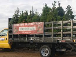 Types Of Live Christmas Trees by Where You Can Buy Christmas Trees In Los Angeles