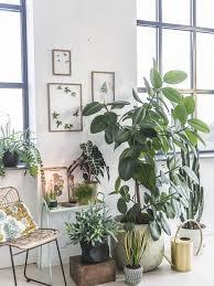 ihre ganz persönliche pflanzenecke pflanzenfreude