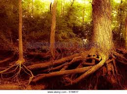 Tree Roots Abstract Stock Photos