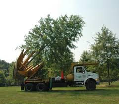 Four More Favorite Northern Virginia Shade Trees | Surrounds ... 1977 Chevrolet 30 Pickup Truck With Tree Spade Item Dc1943 Cci Tree Movers Service Moving Relocating Service Using Mechanical Planter Pin By Jamber Pie On Wyosobniarka Witolda Pinterest Youtube Baumalight Nomad Spades 1998 Mack Dm690s Big John Dd768 1996 Intertional 4700 Vmeer Four More Favorite Northern Virginia Shade Trees Surrounds 1956 6409 Dv9014 So Eagle Ridge Large Sales Delivery Railroad Ties
