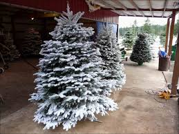 Pre Lit Flocked Artificial Christmas Trees by Christmas Pre Lit Flocked Christmas Tree Fresh Christmas Whites