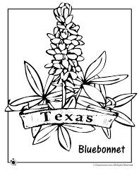 State Flower Coloring Pages Texas Page Classroom Jr
