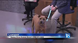 Lavender the dog Pet of the Week for Feb 9
