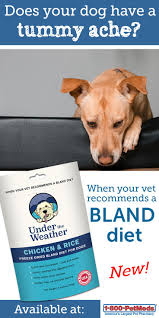Pumpkin Gave Dog Diarrhea by Best 25 Bland Diet For Dogs Ideas On Pinterest Dog Upset