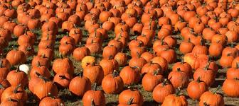 Best Pumpkin Picking Bergen County Nj by Five Fun Things For Fall In Montclair Nj Massage Montclair