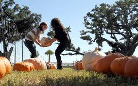 Pumpkin Patch Cleveland Mississippi by This Week Events In South Mississippi Oct 26 Nov 1 The Sun Herald