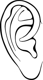 Ear Coloring Page Body Parts Colouring Pages Of Corn