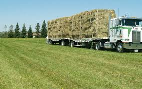 Hay Sales Filerefueling Hay Truckjpg Wikimedia Commons Highway 99 Reopens In South Sacramento After Hay Truck Fire Fox40 Semi Truck Load Of Kims County Line Did We Make A Small Stock Image Image Biological Agriculture 14280973 Boys Life Magazine Old With Photo Trucks Rusty 697938 Straw Trailers Mccauley Richs Cnection Peterbilt 379 At Truckin For Kids 2013 Youtube Hay Train West Coast Style V1 Truck Farming Simulator 2019 John Deere Frontier Implements Landscape Mowing Dowling Bermuda Celebrity Equine Llc