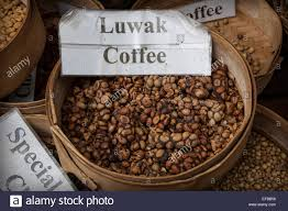 cat coffee civet cat coffee or kopi luwak one of the most expensive coffee