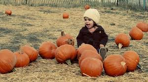 Pumpkin Patch South Austin Tx by Where To Find Pumpkin Patches In San Antonio