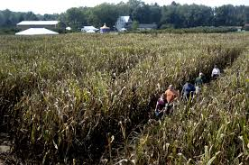 Pumpkin Patch And Hayrides Grand Rapids Mi by Webster Township Bans Fireworks Weddings At Agri Tourism Farms