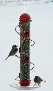 Put up bird feeders now before it s cold