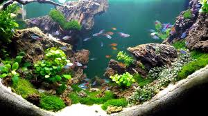Aquascape Design - YouTube September 2010 Aquascape Of The Month Sky Cliff Aquascaping How To Set Up A Planted Aquarium Design Desiging Tank Basic Forms Aqua Rebell Suitable Plants With Picture Home Mariapngt Nature With Hd Resolution 1300x851 Designs Unique Hardscape Ideas And Fnitures Tag Wallpapers Flowers Beautiful Garden Best 25 Aquascaping Ideas On Pinterest From Start To Finish By Greg Charlet