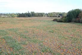 Pumpkin Patch Sauvie Island Corn Maze by Fall On Sauvie Island Conscious Engagement