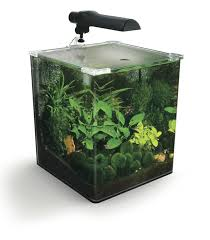 8 best tank ideas images on aquarium ideas aquarium