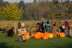 Swan Farms Snohomish Pumpkin Patch by Halloween And Pumpkin Patch Photos Images U0026 Pictures